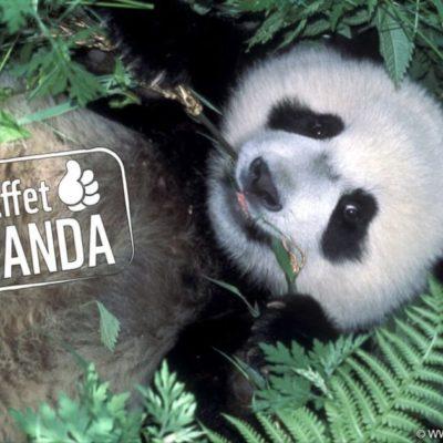 L'humeur du panda