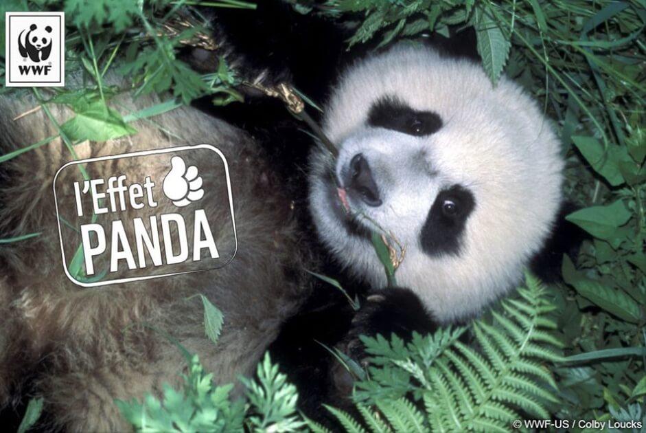 l'Effet Panda - WWF