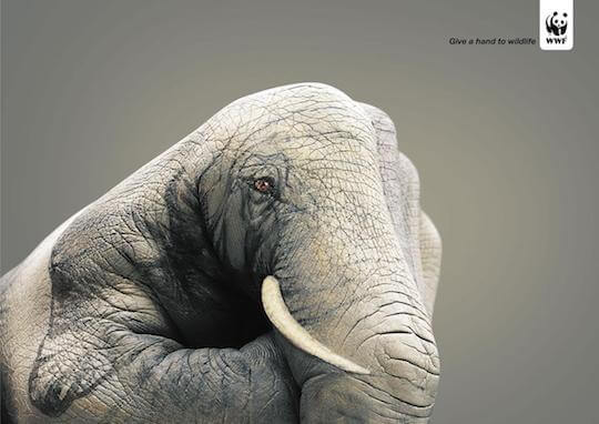 Give a hand to wildlife Eléphant