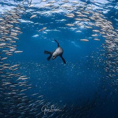 Happening artistique protection des océans WWF France